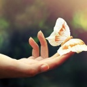 Butterfly-In-Her-Hands-wide-i